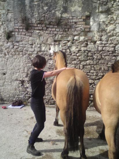 Troisième niveau sur les poney des Ecuries de Chambord