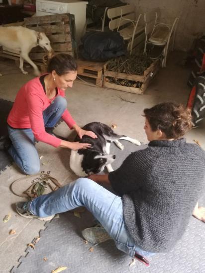 Shiatsu canin méridien Vessie