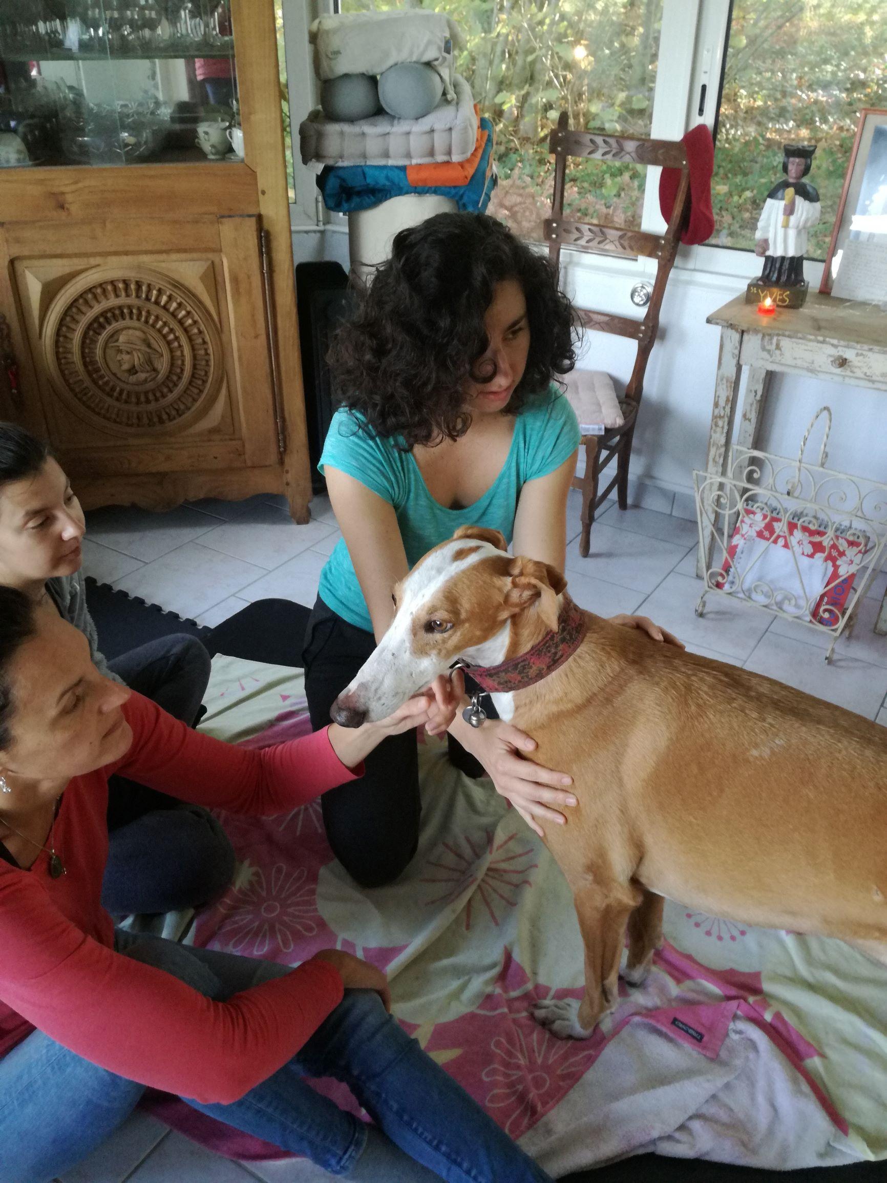 Shiatsu canin, Falcao travail de l'épaule