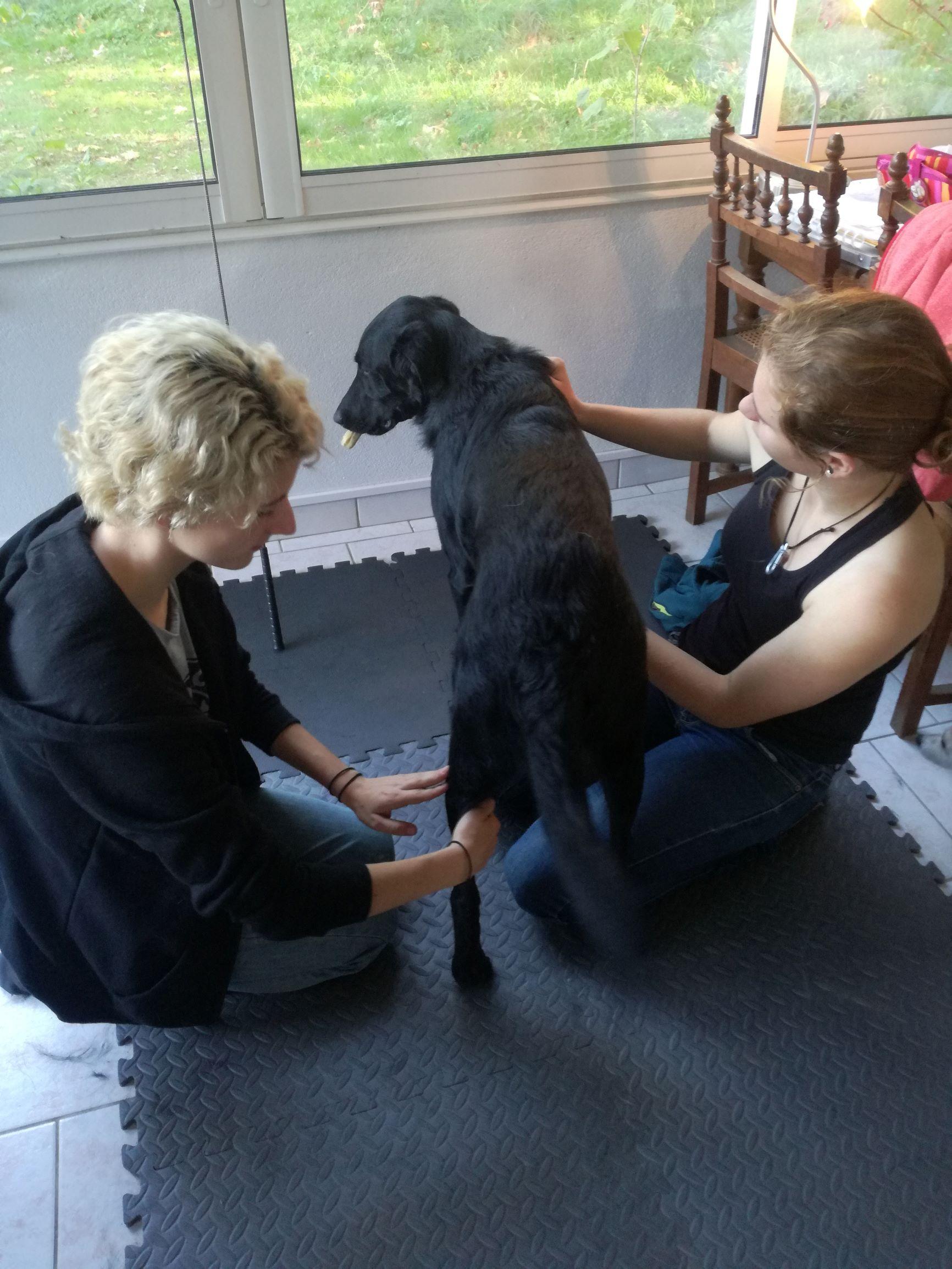 Shiatsu canin, Jo remontée des yin de postérieur