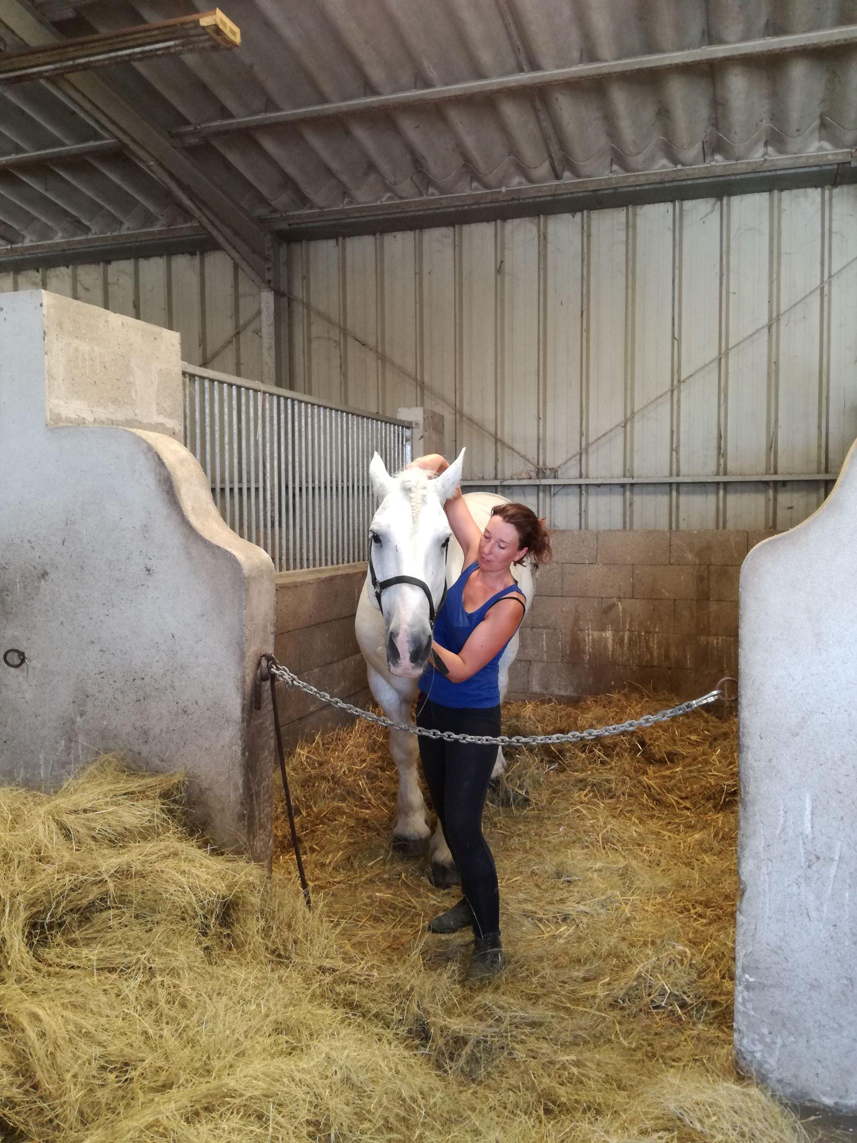 Shiatsu du cheval, travail de la crête occipitale
