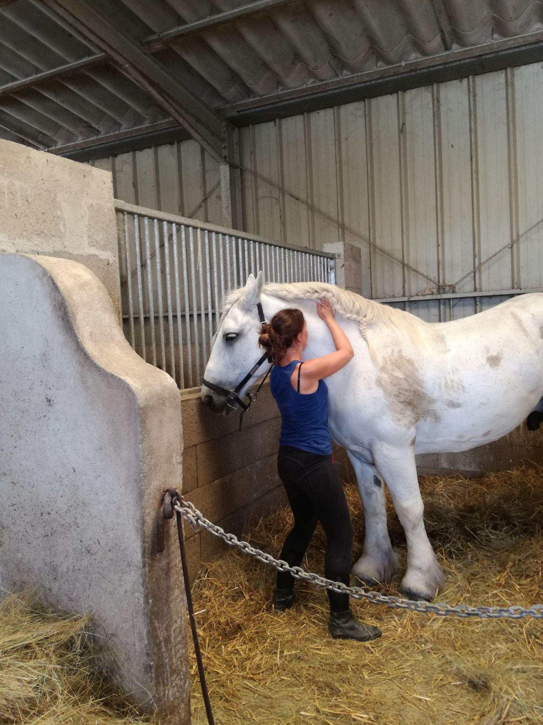 Shiatsu du cheval, travail de Vessie sur l'encolure